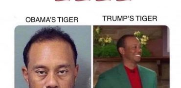 Under Trump, Even Tiger is Great Again
