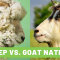 Lance Rewind – Sheep Nations, Goat Nations, And America's Great Shaking